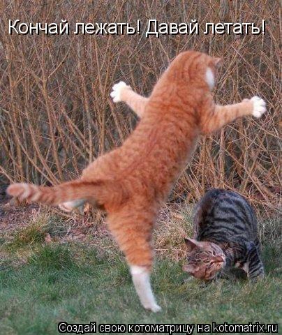 Котоматрица: Кончай лежать! Давай летать!