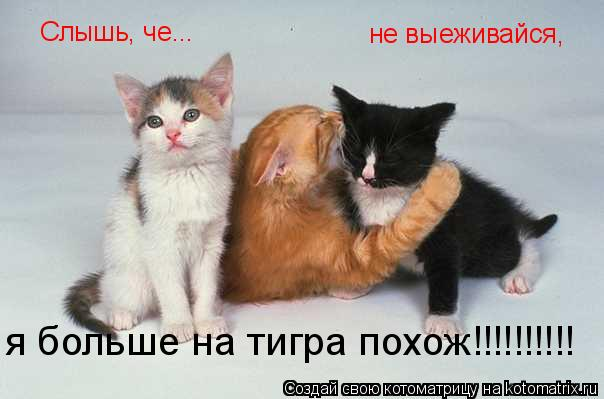 Котоматрица: Слышь, че... не выеживайся, я больше на тигра похож!!!!!!!!!!