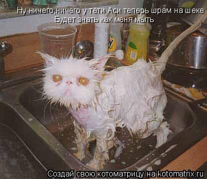 Котоматрица: Ну ничего,ничего у тёти Аси теперь шрам на шеке Будет знать как меня мыть
