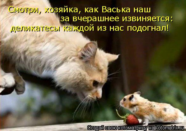 Котоматрица: Смотри, хозяйка, как Васька наш за вчерашнее извиняется: деликатесы каждой из нас подогнал!