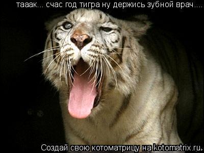 Котоматрица: тааак... счас год тигра ну держись зубной врач....