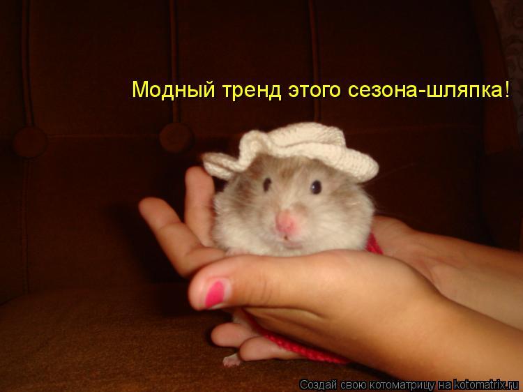Котоматрица: Модный тренд этого сезона-шляпка!