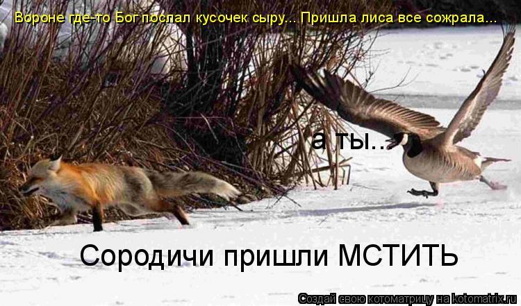 Котоматрица: Вороне где-то Бог послал кусочек сыру... Пришла лиса все сожрала... Сородичи пришли МСТИТЬ а ты...