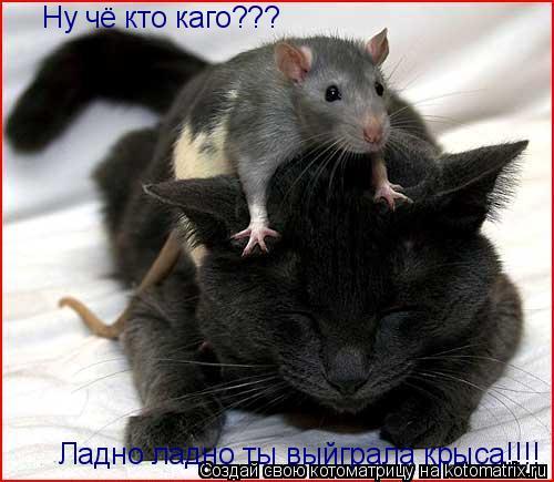Котоматрица: Ну чё кто каго??? Ладно ладно ты выйграла крыса!!!!