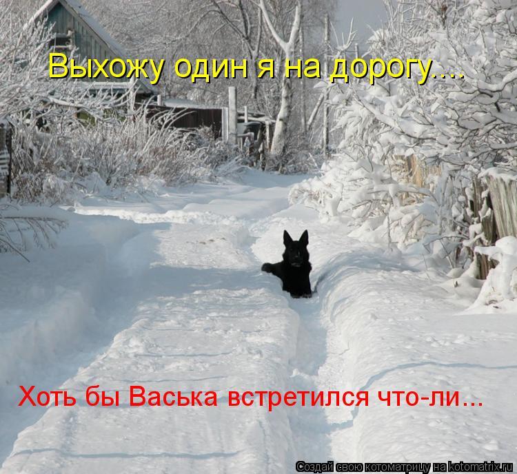 Котоматрица: Выхожу один я на дорогу.... Хоть бы Васька встретился что-ли...