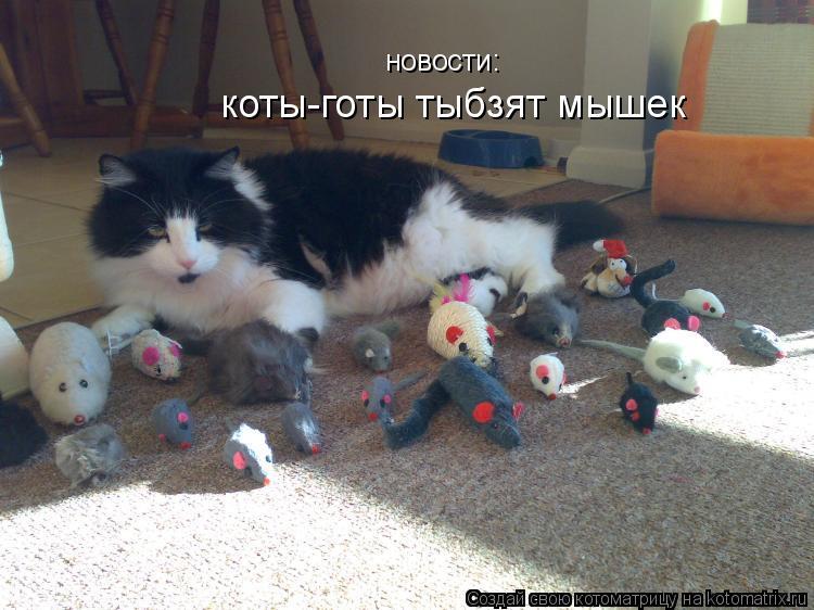Котоматрица: новости: коты-готы тыбзят мышек