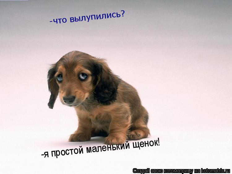 Котоматрица: -что вылупились? -я простой маленький щенок!