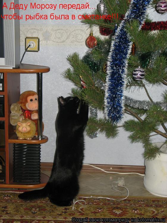 Котоматрица: А Деду Морозу передай... чтобы рыбка была в сметанке!!!..
