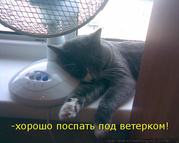 Котоматрица: -хорошо поспать под ветерком!