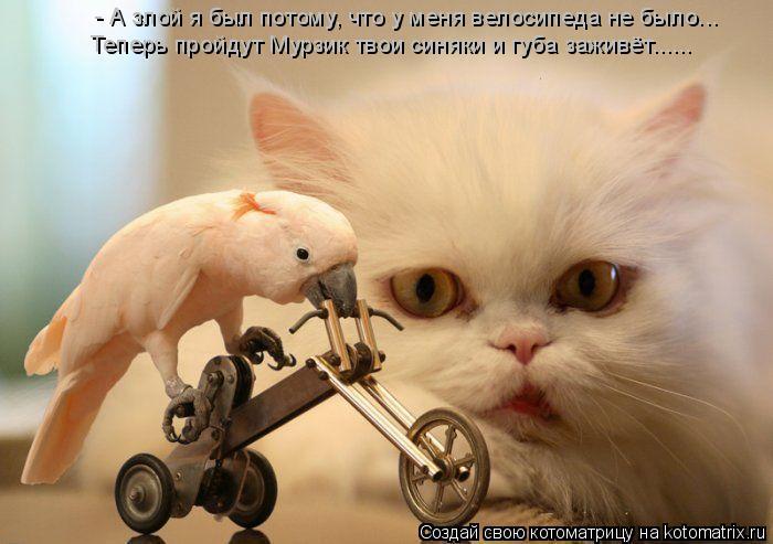 Котоматрица: - А злой я был потому, что у меня велосипеда не было... Теперь пройдут Мурзик твои синяки и губа заживёт......