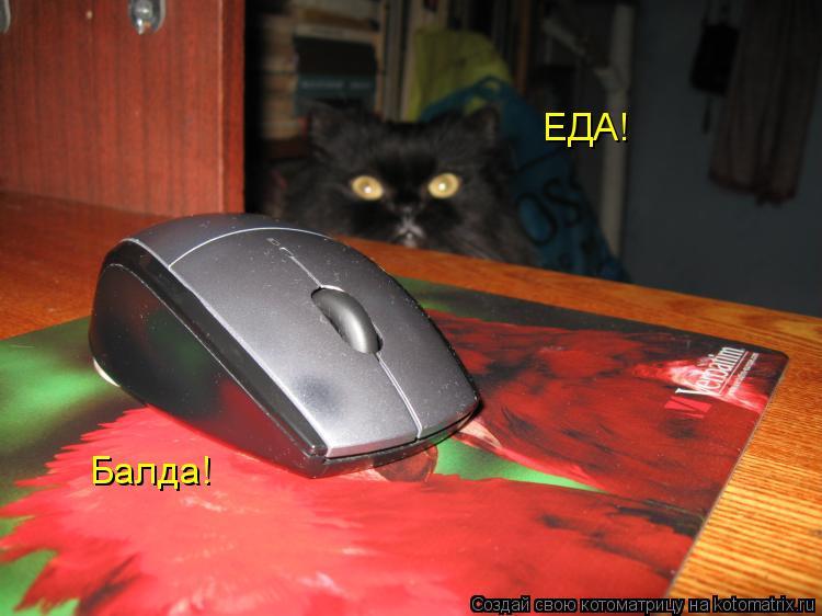 Котоматрица: ЕДА! Балда!
