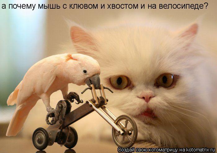 Котоматрица: а почему мышь с клювом и хвостом и на велосипеде?