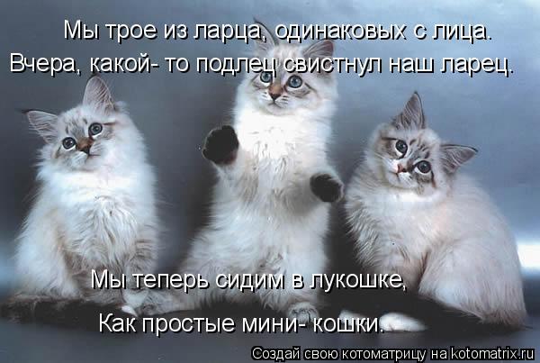 Котоматрица: Мы трое из ларца, одинаковых с лица. Вчера, какой- то подлец свистнул наш ларец. Как простые мини- кошки. Мы теперь сидим в лукошке,