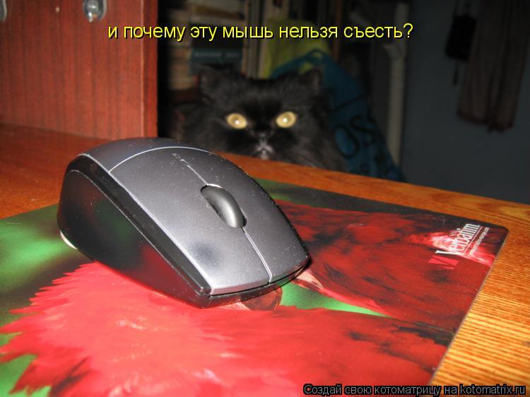 Котоматрица: и почему эту мышь нельзя съесть?