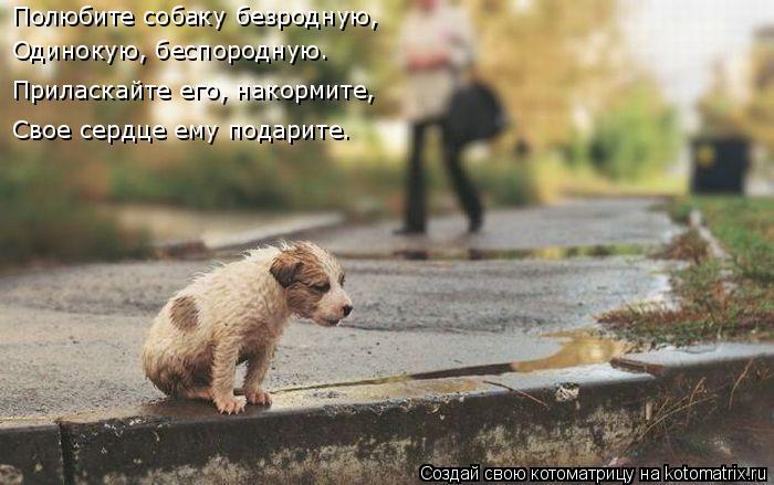 Котоматрица: Полюбите собаку безродную, Одинокую, беспородную. Приласкайте его, накормите, Свое сердце ему подарите.