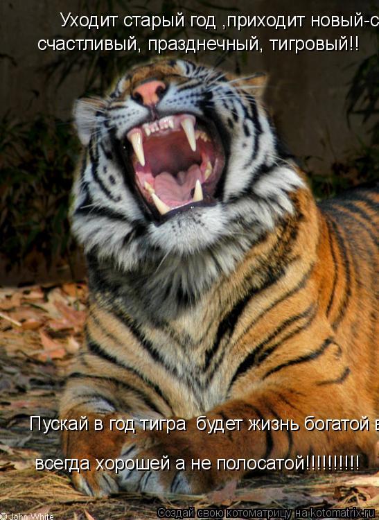 Котоматрица: Уходит старый год ,приходит новый-   Уходит старый год ,приходит новый-счастливый, празднечный, тигровый!! счастливый, празднечный, тигровый!