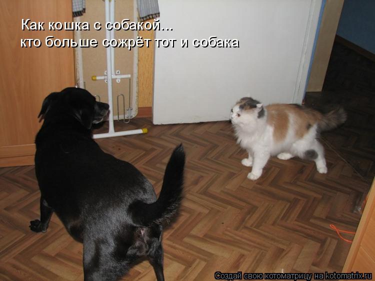 Котоматрица: Как кошка с собакой... кто больше сожрёт тот и собака