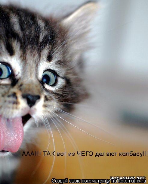 Котоматрица: ААА!!! ТАК вот из ЧЕГО делают колбасу!!!!