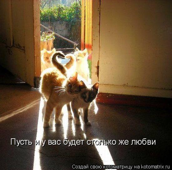 Котоматрица: Пусть и у вас будет столько же любви