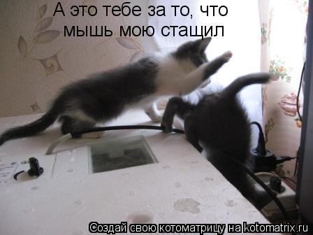 Котоматрица: мышь мою стащил А это тебе за то, что