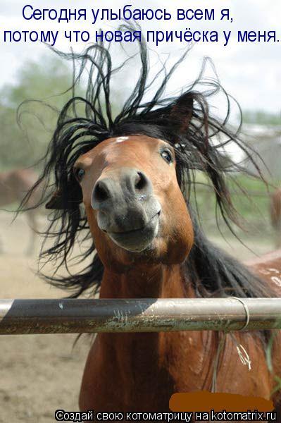 Котоматрица: потому что новая причёска у меня. Сегодня улыбаюсь всем я,