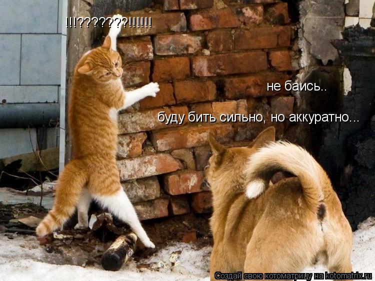 Котоматрица: не баись.. буду бить сильно, но аккуратно... !!!???????!!!!!!