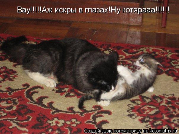 Котоматрица: Вау!!!!!Аж искры в глазах!Ну котярааа!!!!!!