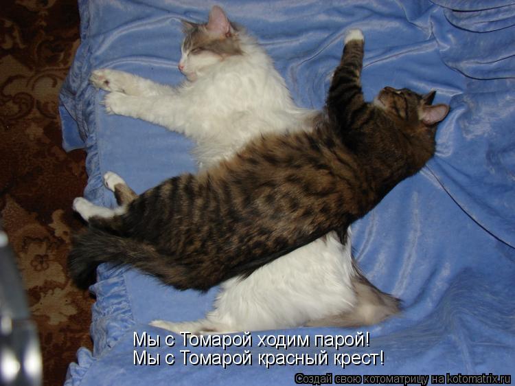 Котоматрица: Мы с Томарой ходим парой! Мы с Томарой красный крест!