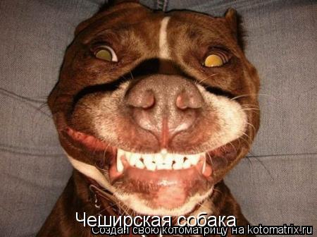 Котоматрица: Чеширская собака
