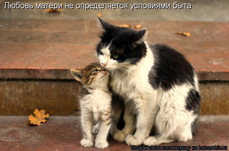 Котоматрица: Любовь матери не определяется условиями быта