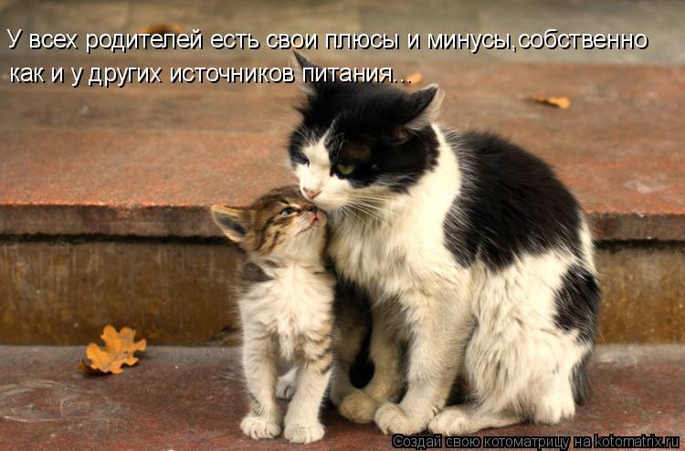 Котоматрица: У всех родителей есть свои плюсы и минусы,собственно как и у других источников питания...