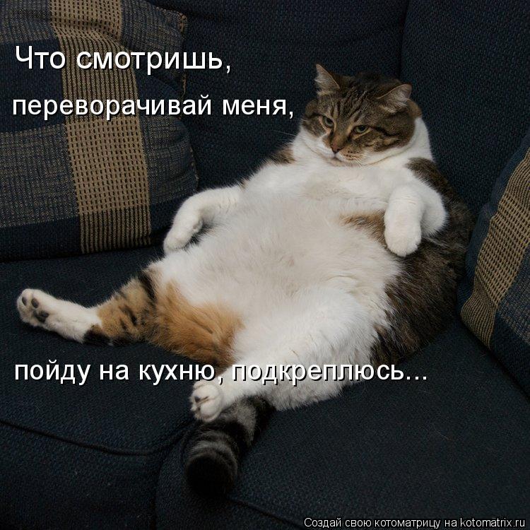 Котоматрица: Что смотришь,   переворачивай меня, пойду на кухню, подкреплюсь...