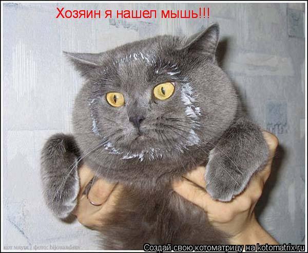 Котоматрица: Хозяин я нашел мышь!!! Хозяин я нашел мышь!!!