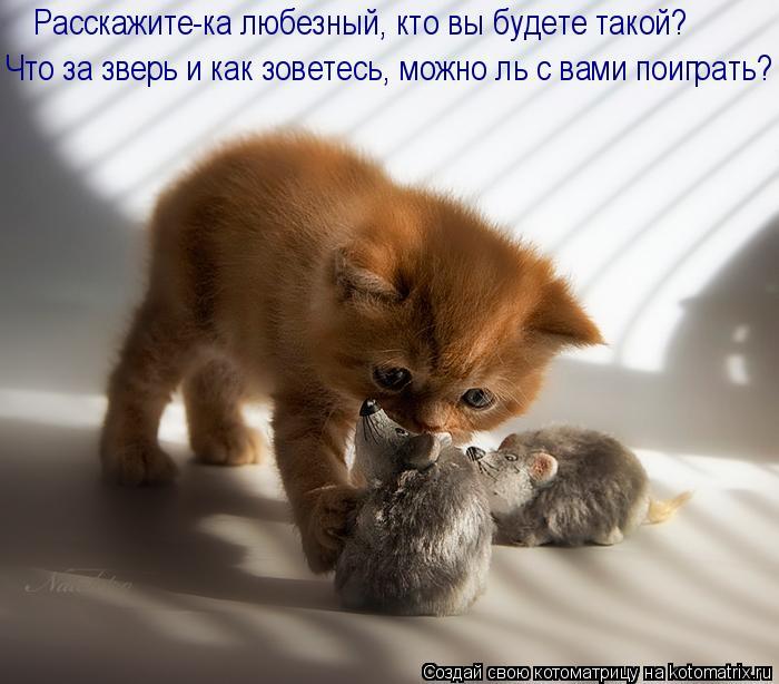 Котоматрица: Что за зверь и как зоветесь, можно ль с вами поиграть? Расскажите-ка любезный, кто вы будете такой?