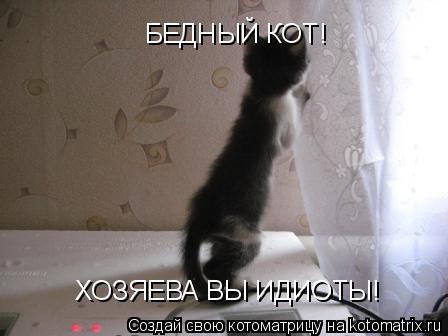 Котоматрица: БЕДНЫЙ КОТ! ХОЗЯЕВА ВЫ ИДИОТЫ!