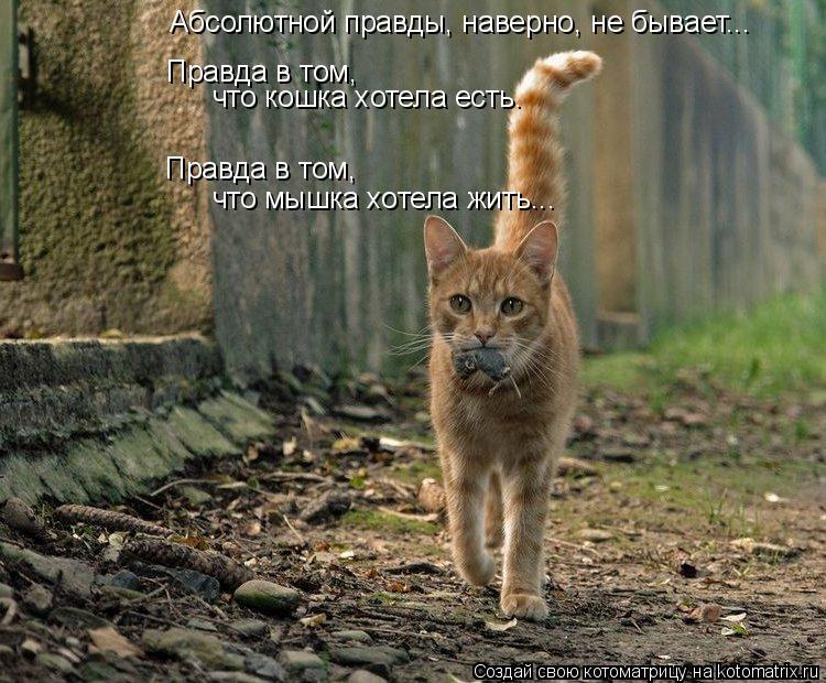 Котоматрица: Абсолютной правды, наверно, не бывает... Правда в том,  Правда в том,  что мышка хотела жить... что кошка хотела есть.
