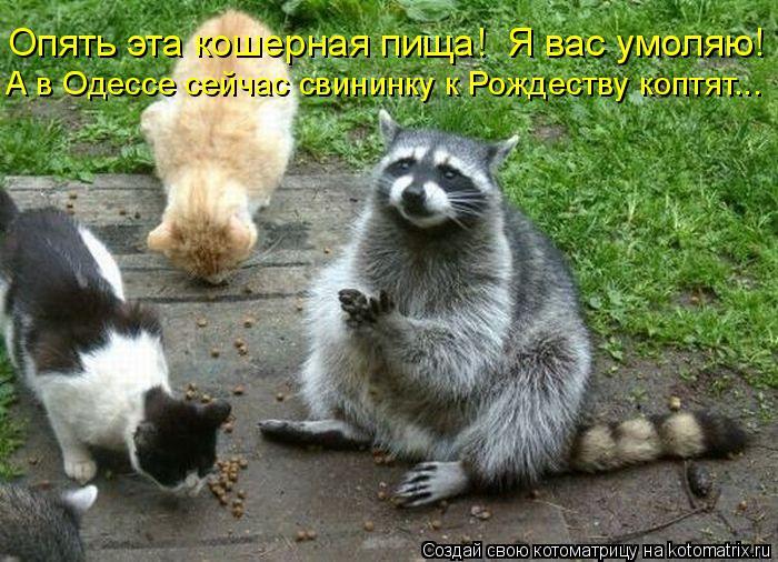 Котоматрица: Опять эта кошерная пища!  Я вас умоляю! А в Одессе сейчас свининку к Рождеству коптят...