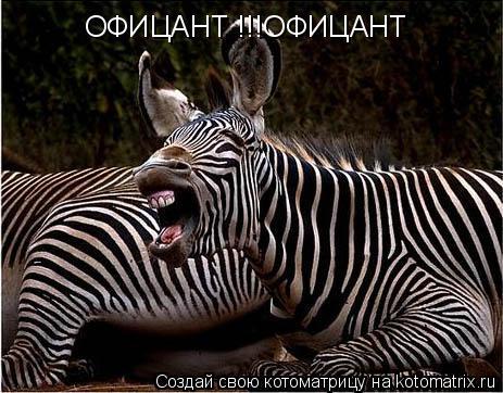 Котоматрица: ОФИЦАНТ !!!ОФИЦАНТ