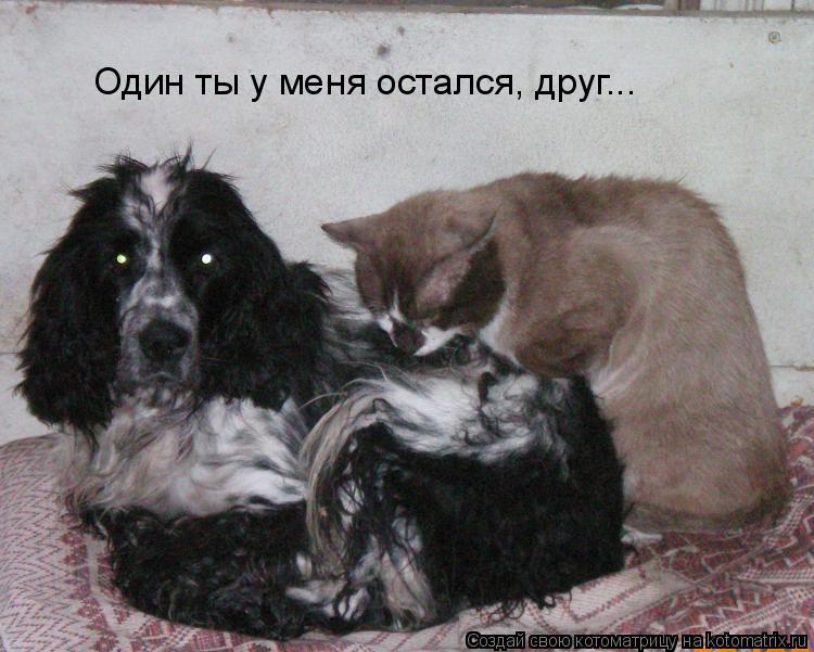 Котоматрица: Один ты у меня остался, друг...
