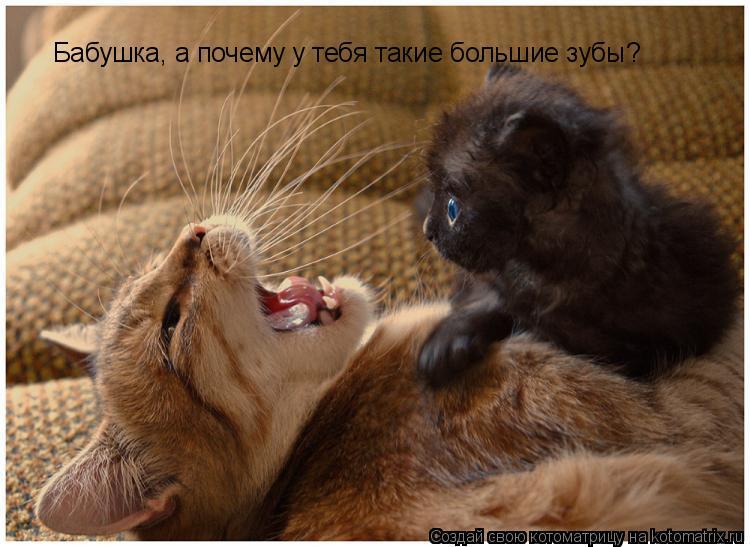 Котоматрица: Бабушка, а почему у тебя такие большие зубы?