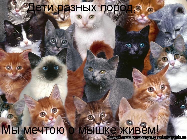 Котоматрица: Дети разных пород, Мы мечтою о мышке живём!