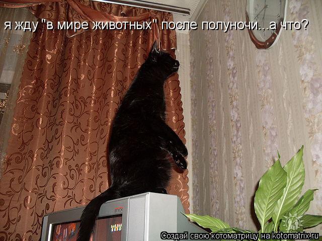 """Котоматрица: я жду """"в мире животных"""" после полуночи...а что?"""