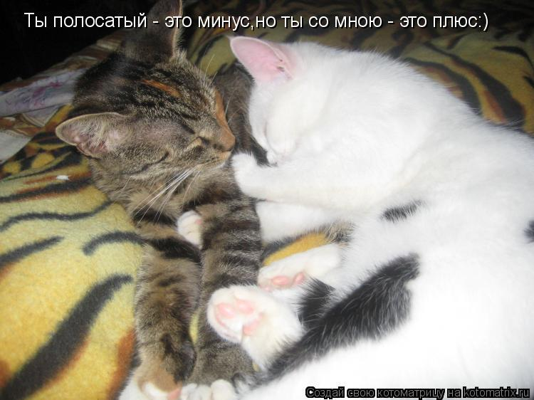 Котоматрица: Ты полосатый - это минус,но ты со мною - это плюс:)