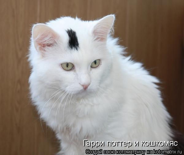 Котоматрица: Гарри поттер и кошкомяс