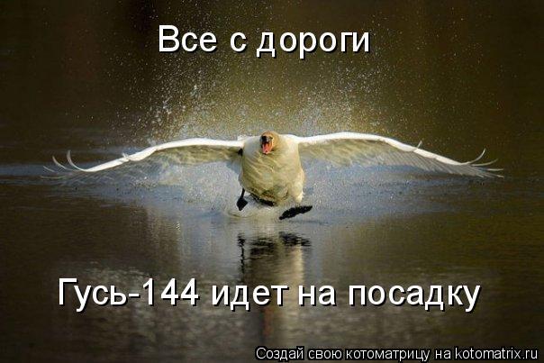 Котоматрица: Все с дороги Гусь-144 идет на посадку