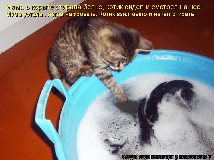 Котоматрица: Мама в корыте стирала белье, котик сидел и смотрел на нее. Мама устала , легла на кровать. Котик взял мыло и начал стирать!
