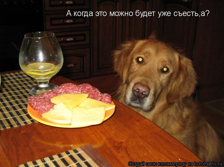 Котоматрица: А когда это можно будет уже съесть,а?