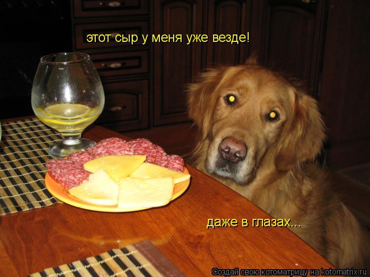 Котоматрица: этот сыр у меня уже везде! даже в глазах...