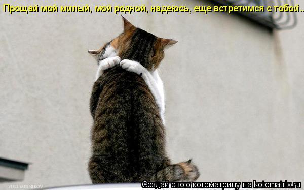 Котоматрица: Прощай мой милый, мой родной, надеюсь, еще встретимся с тобой...