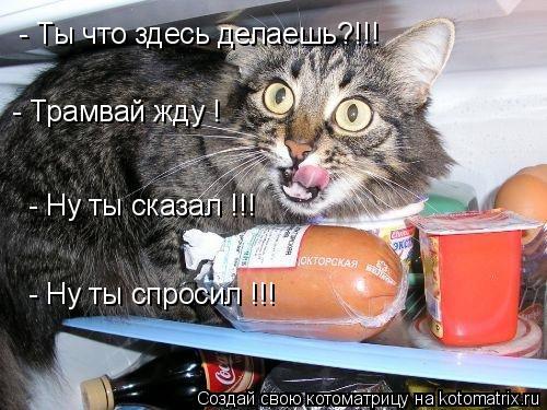 Котоматрица: - Трамвай жду !  - Ну ты сказал !!!   - Ну ты спросил !!!   - Ты что здесь делаешь?!!!